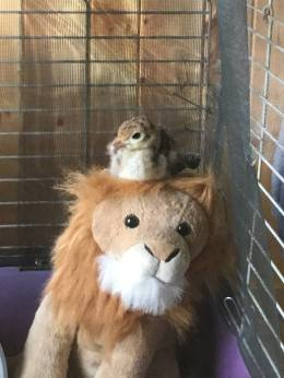 Rudy and his Lion