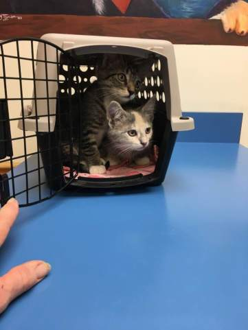 Kitties at vet