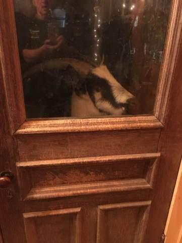 Sadie at the back door. n