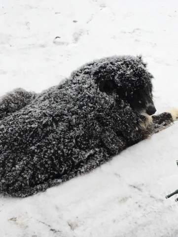 snowy grissom_n