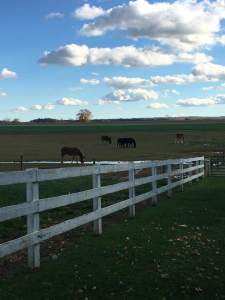 Horses and mules n